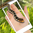 蛇屏幕恶作剧app